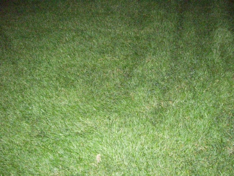 Pictures Only - Page 2 100_1514