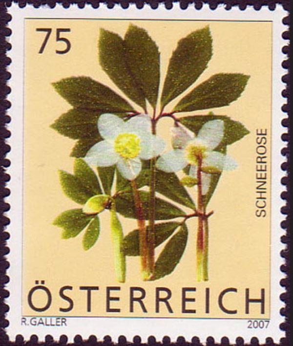 Heimische Blumen 0130