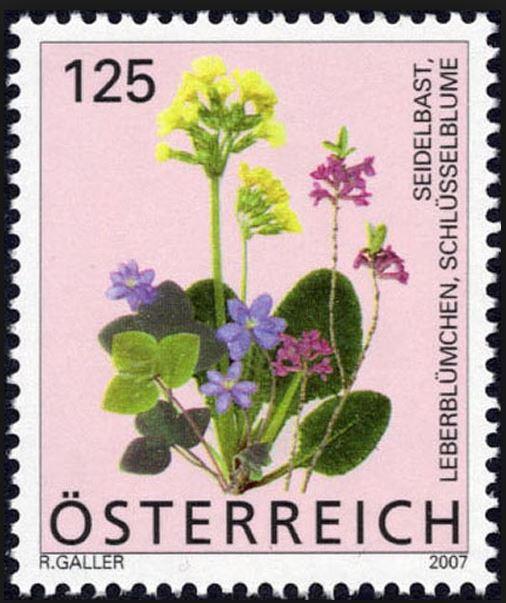 Heimische Blumen 0132