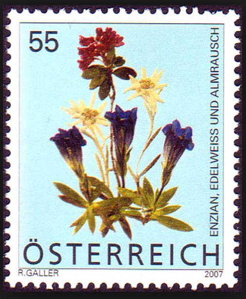 Heimische Blumen 0135