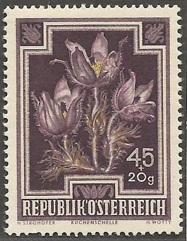 Heimische Blumen Bild1110
