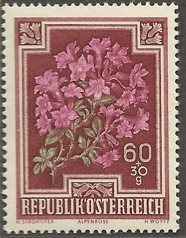 Heimische Blumen Bild1210