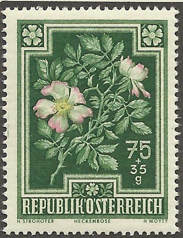 Heimische Blumen Bild1310
