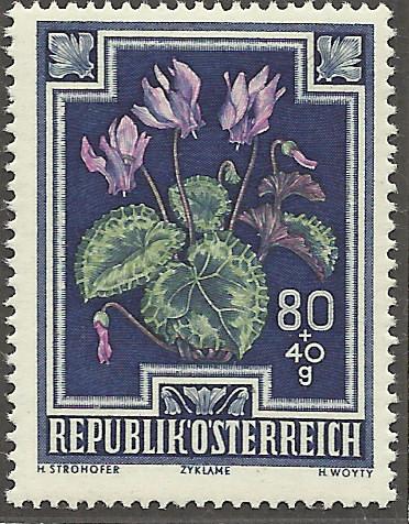 Heimische Blumen Bild1410