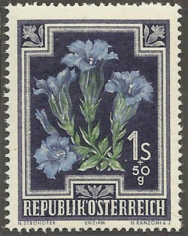 Heimische Blumen Bild1510