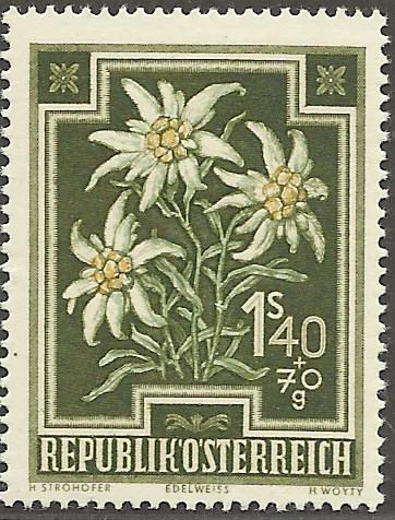 Heimische Blumen Bild1610