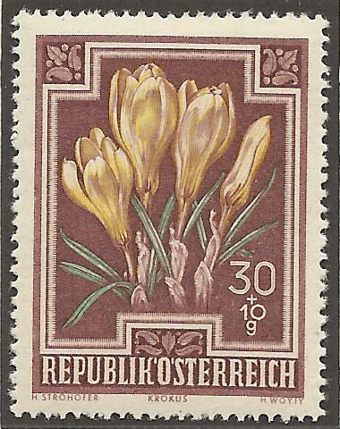 Heimische Blumen Bild910