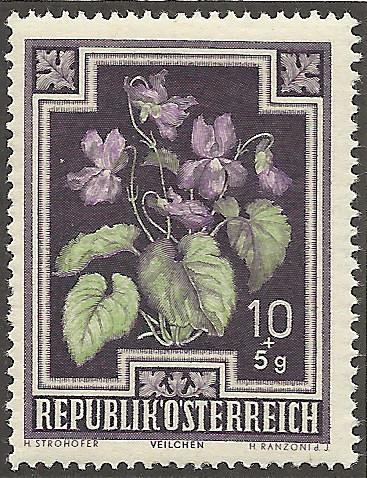 Heimische Blumen Mozart10