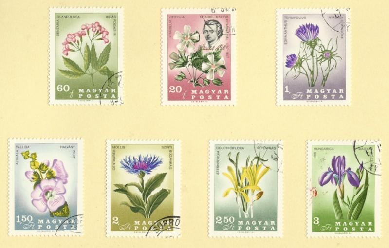 Blumen in botanischen Gärten Wim110