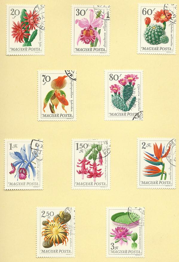 Blumen in botanischen Gärten Wim111