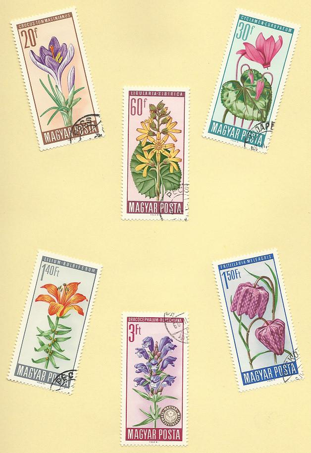 Geschüzte Blumen Wim112
