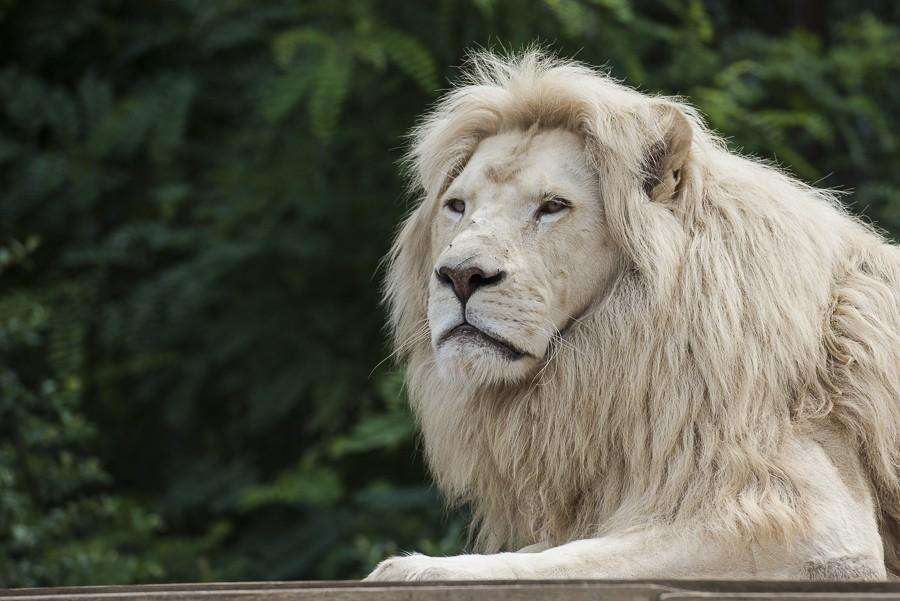 Zoo d'Amnéville (+ajout 18/10) 03082011