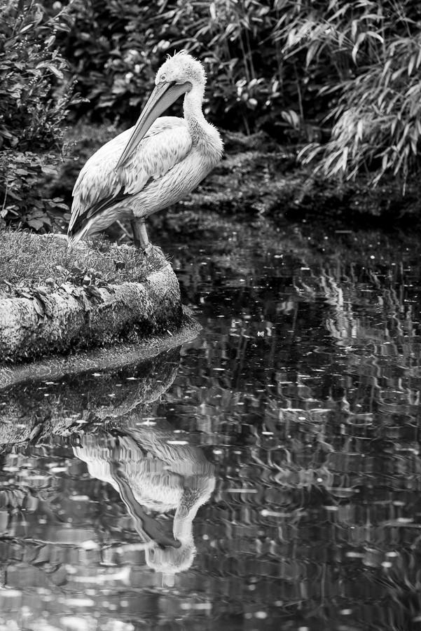 Zoo d'Amnéville (+ajout 18/10) 03082012