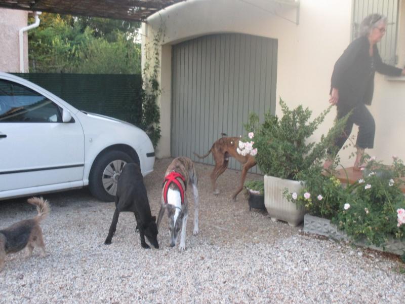 (Virtudes)LARA,  petite galga de 9 ans à l'adoption Scooby France Adoptée  - Page 8 Img_0124