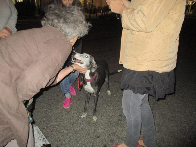 (Virtudes)LARA,  petite galga de 9 ans à l'adoption Scooby France Adoptée  - Page 5 Img_0911