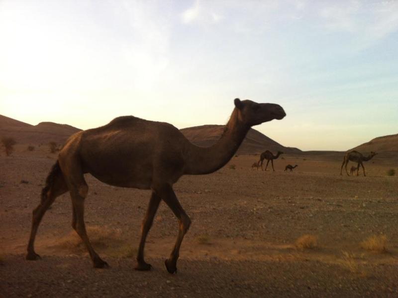 Rallye Oilibya du Maroc 2012 55949710