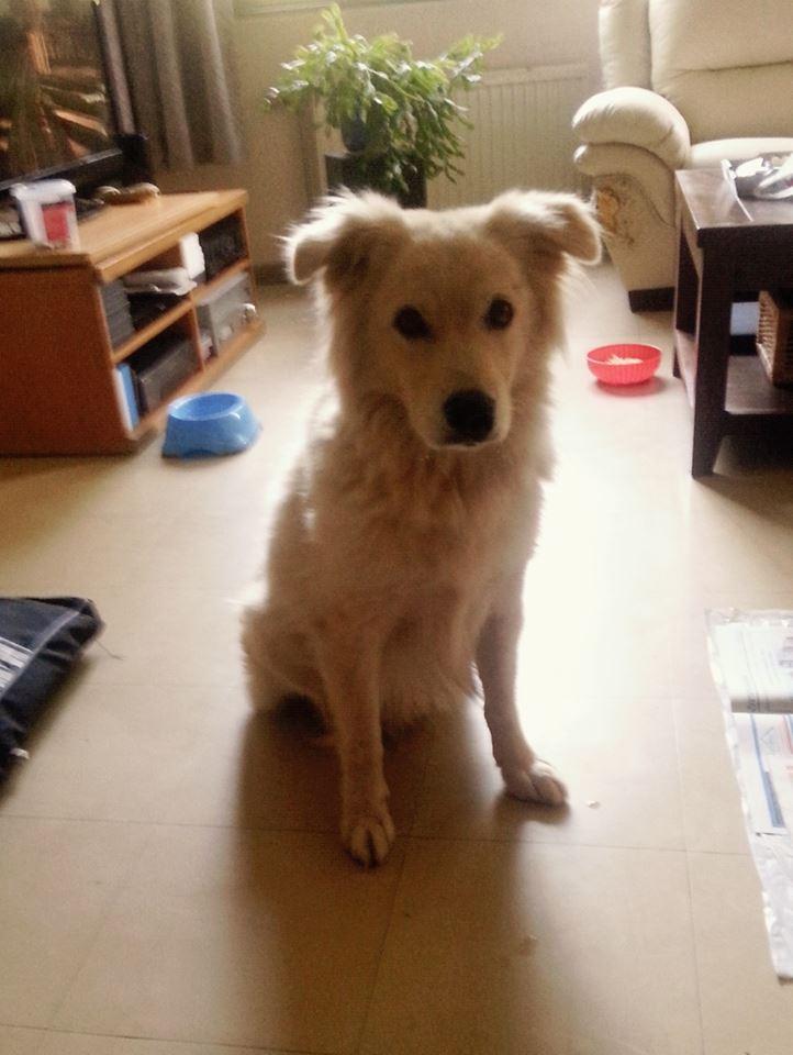 Besoin d'aide pour chien très angoisé 10676310