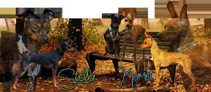 Nos chiens bébés ou avec leurs parents Signat13
