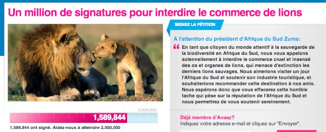 Sauvons les lions d'afrique Captur13
