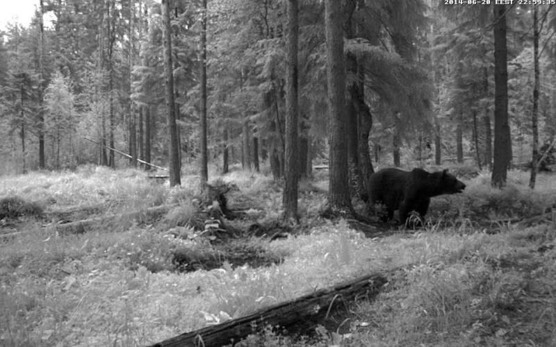 Alataguse Bear Cam 2013 - Page 6 Vlcsna13