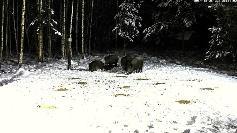 Boar cam Winter 2014-2015 - Page 3 Vlcsna58