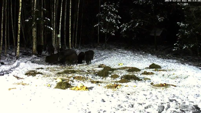 Boar cam Winter 2014-2015 - Page 4 Vlcsna67