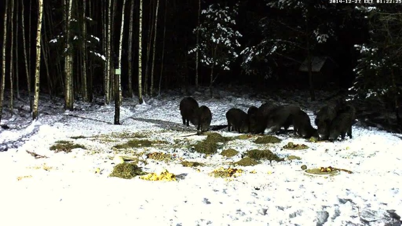 Boar cam Winter 2014-2015 - Page 4 Vlcsna73