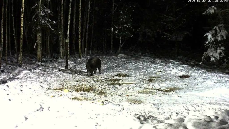 Boar cam Winter 2014-2015 - Page 4 Vlcsna86