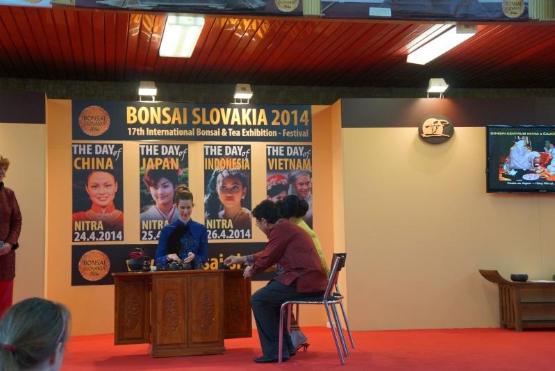 Bonsai Slovakia Dsc00911