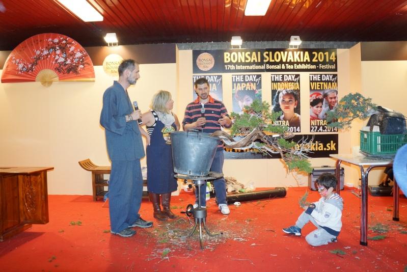 Bonsai Slovakia Dsc01110