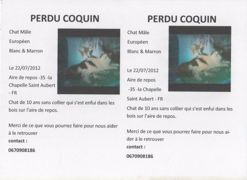 perdu COQUIN chat blanc et marron - Aire de repos -35 -la Chapelle Saint Aubert (JUILLET 2012) Affich10