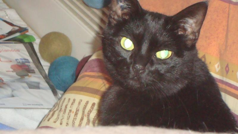 perdu ERA chatte noire à 35 RENNES (juillet 2013) Era10