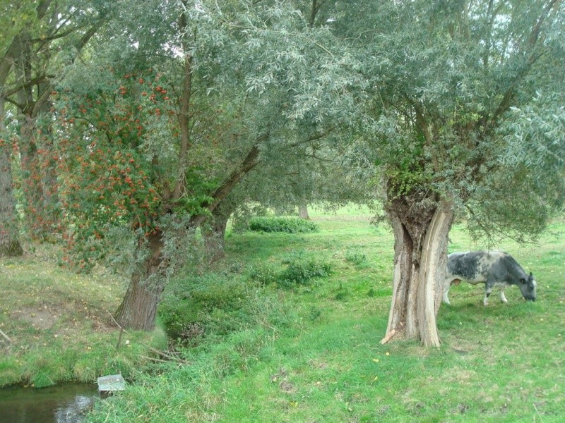 Bialbero di Casorzo - Casorzo - Piémont - Italie  29724010