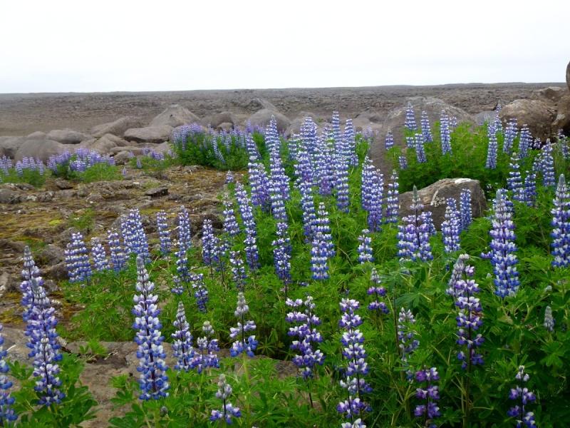 Islande, un jour, une photo - Page 7 Galga10