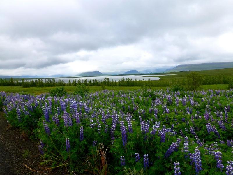 Islande, un jour, une photo - Page 8 P1080615