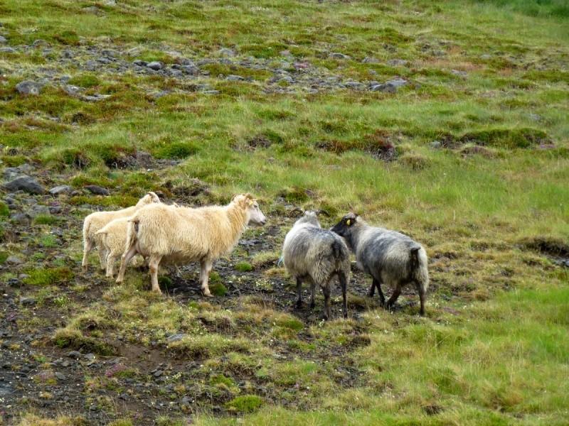 Islande, un jour, une photo - Page 8 P1080715