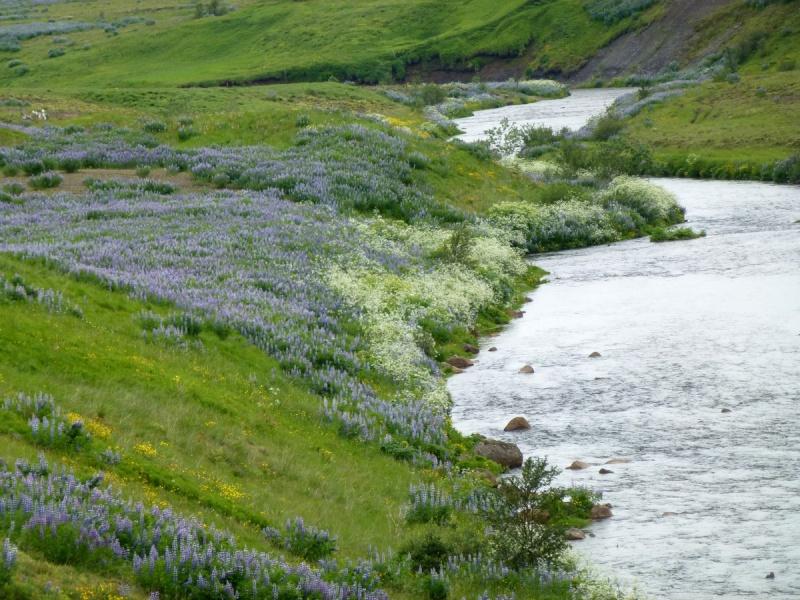 Islande, un jour, une photo - Page 8 P1080910
