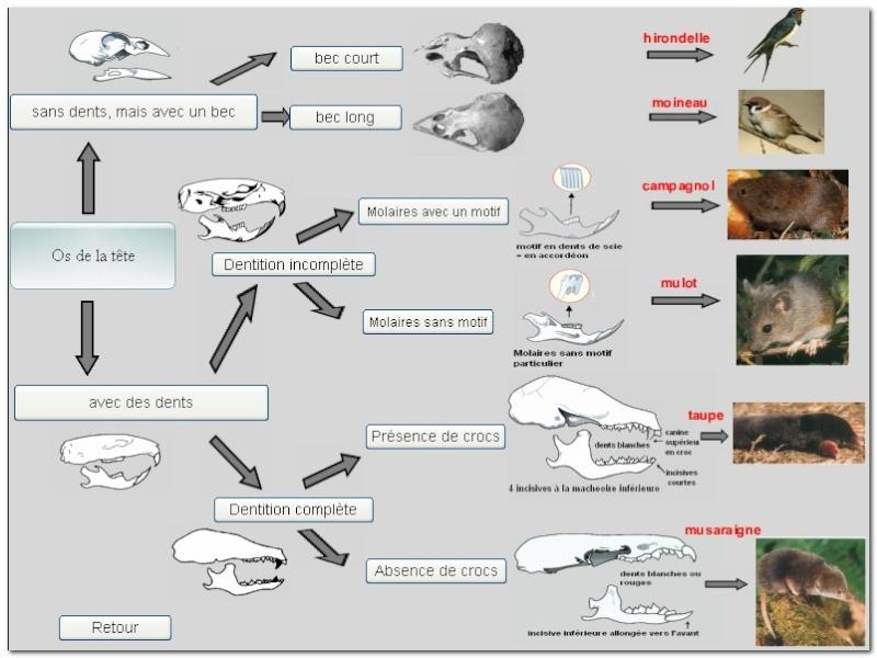 Squelettes à gogo Logici10