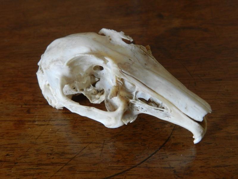 Squelettes à gogo Marcla21
