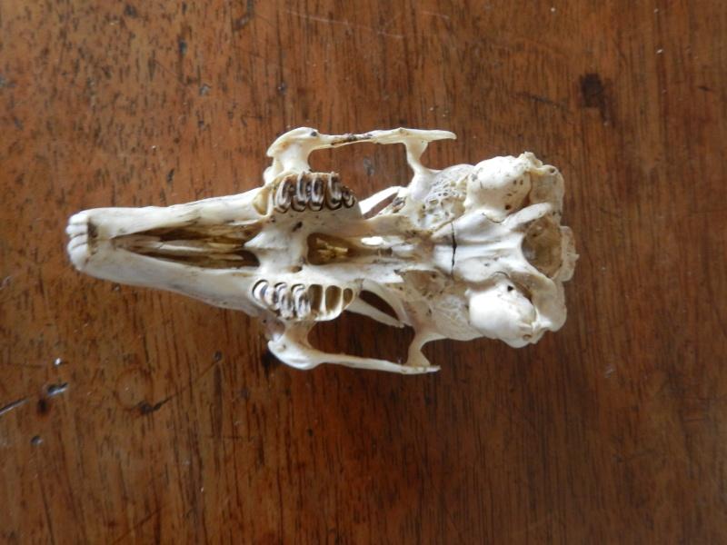Squelettes à gogo Marcla23