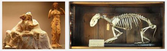 Juxtapositions oulipiennes d'images - Poésie des contrastes Morts10