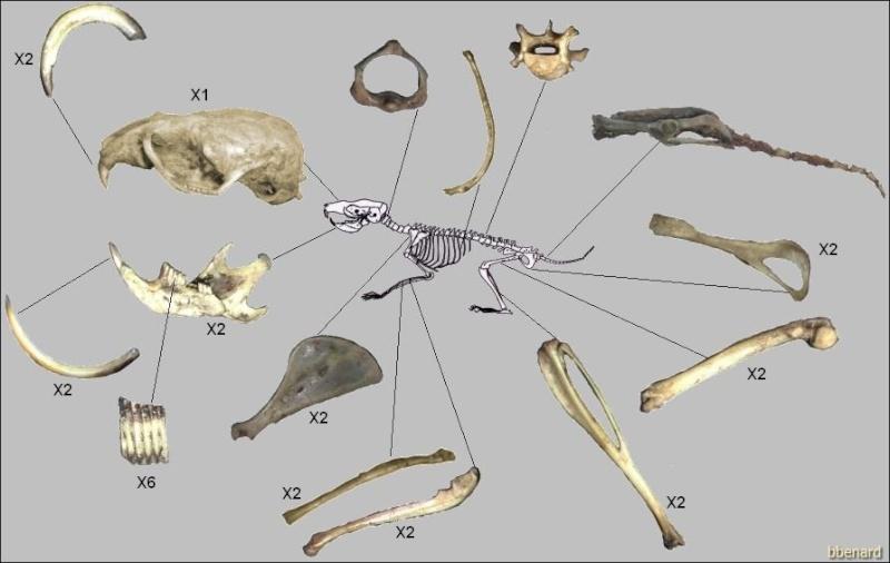 Squelettes à gogo Squele10