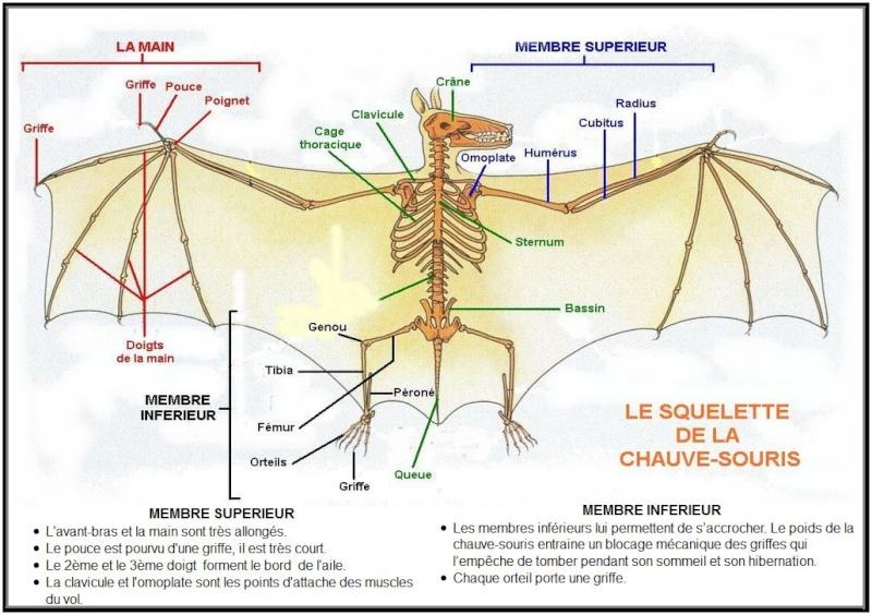 Squelettes à gogo Squele12