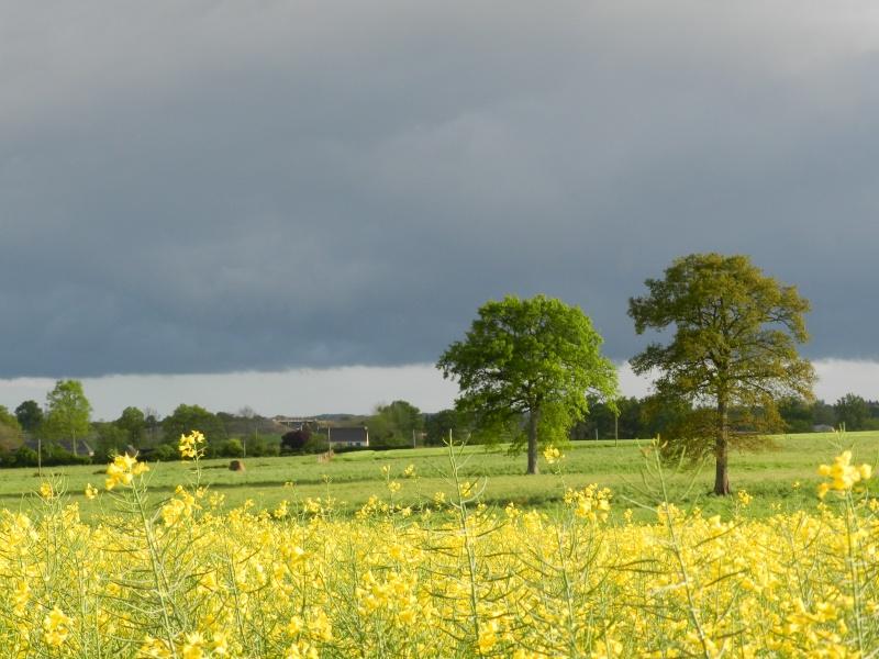 printemps 2014 sous l'égide de la couleur jaune Vauvar33