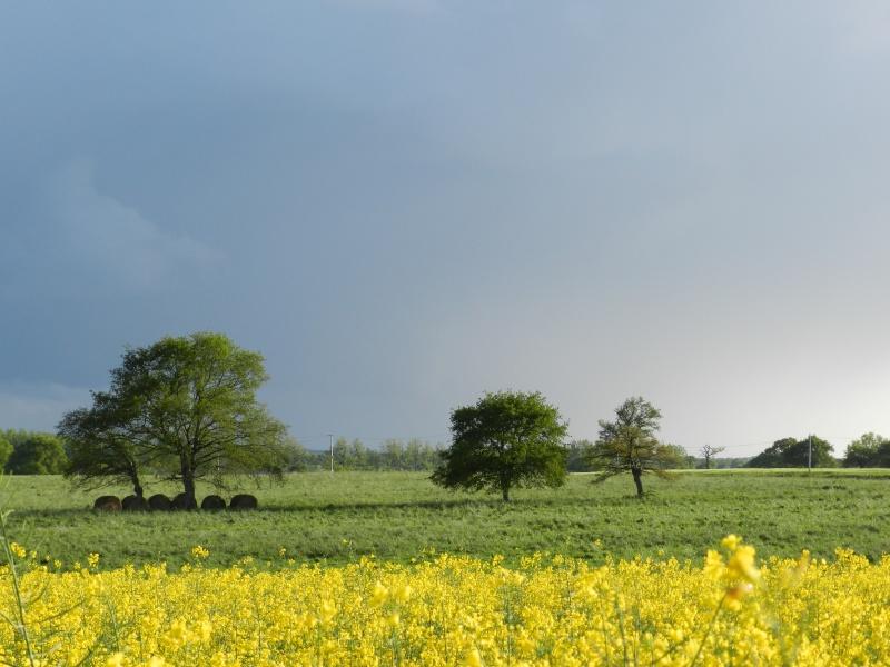 printemps 2014 sous l'égide de la couleur jaune Vauvar35
