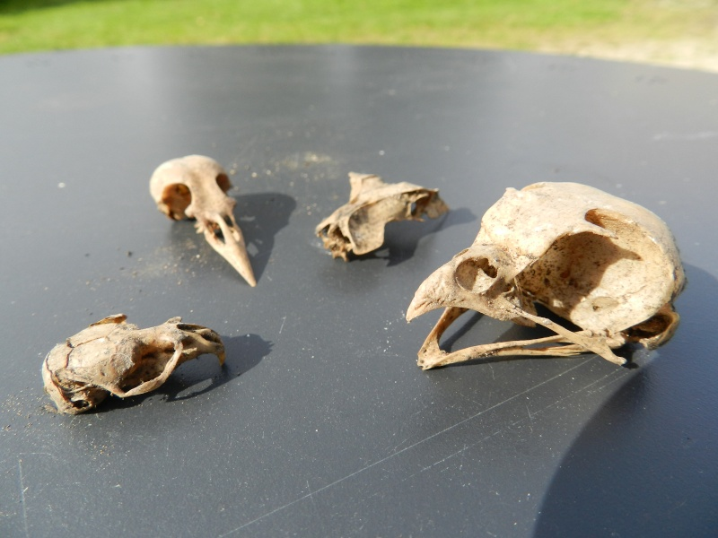 Squelettes à gogo Vauvyr10