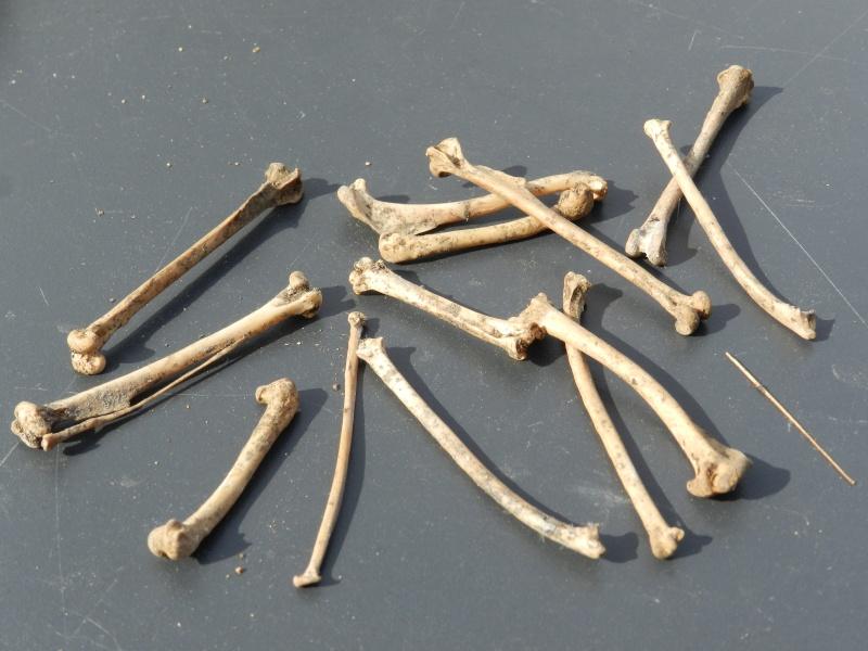 Squelettes à gogo Vauvyr12
