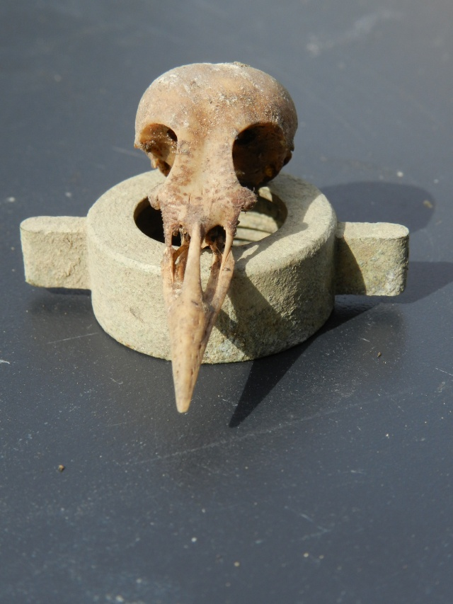 Squelettes à gogo Vauvyr16