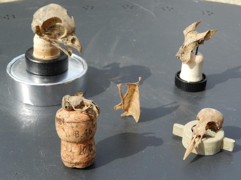 Squelettes à gogo Vauvyr19