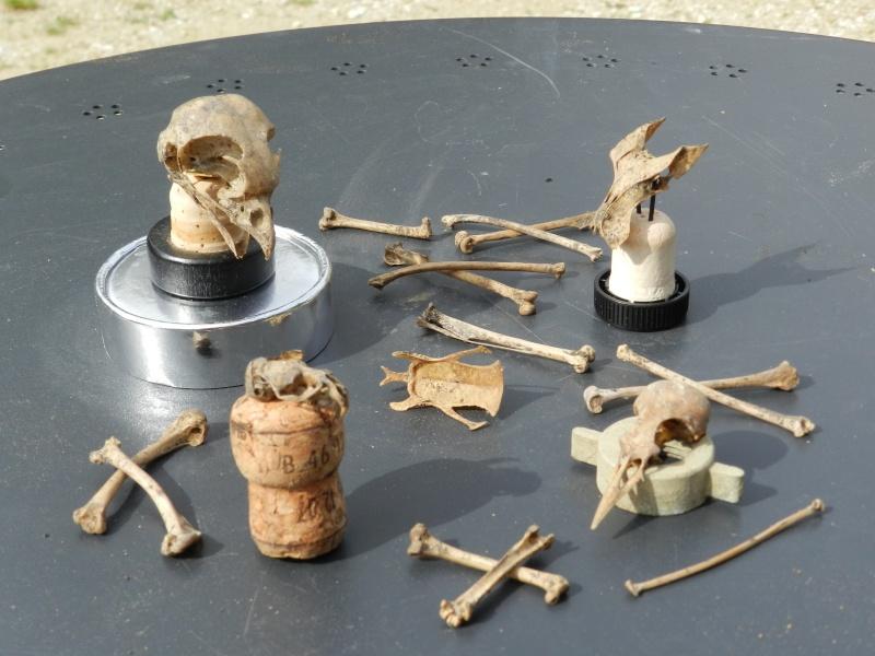 Squelettes à gogo Vauvyr20